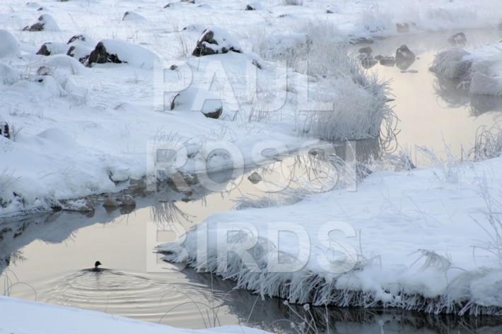 Quarry creek winter hoarfrost scene