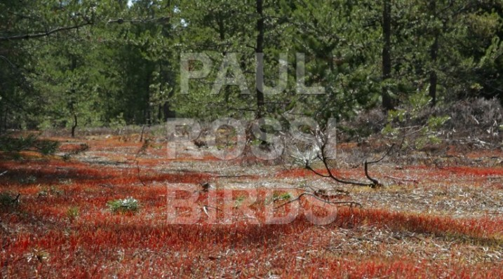 Red moss late April